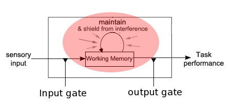 working memory maintenance interference control