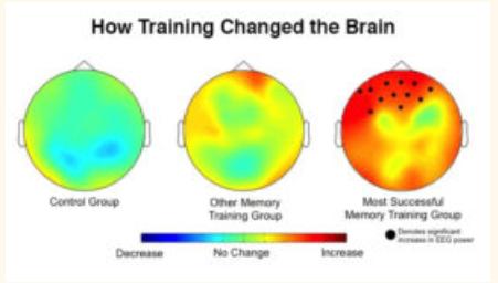 dual n-back training brain effects